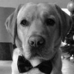 Yogi, la mascotte de l'agence Golf Travellers